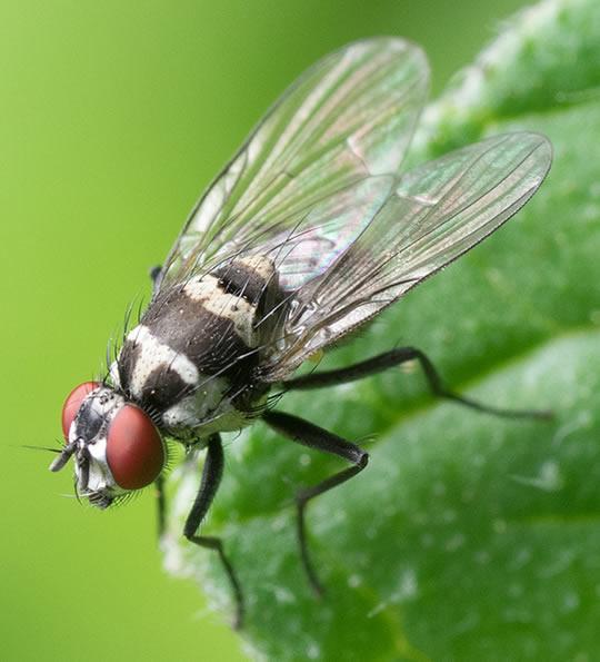 Biozanz anti mosche per giardino